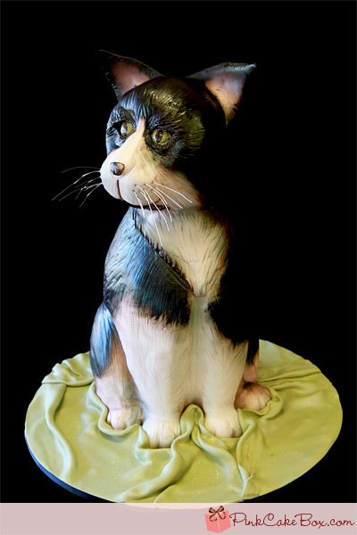 Astounding Birthday Cakes Cat Birthday Cakes Birthday Cakes Yesbirthday Personalised Birthday Cards Veneteletsinfo