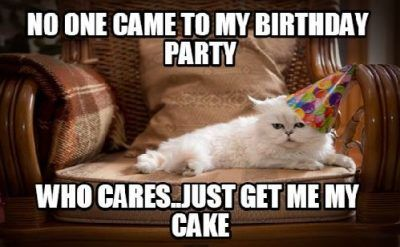 Prime Happy Birthday Gif 10 Adorable Happy Birthday Cat Memes For A Personalised Birthday Cards Epsylily Jamesorg